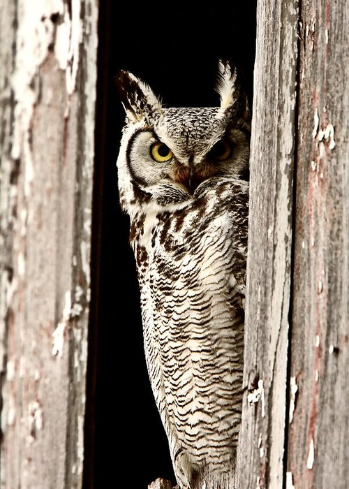 Great Horned Owl Greeting Card featuring the digital art Great Horned Owl Perched In Barn Window by Mark Duffy