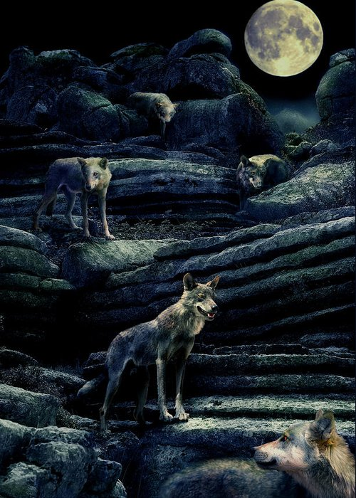 Wolf Greeting Card featuring the photograph Moonlit Wolf Pack by Mal Bray