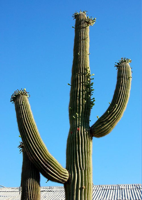 Saguaro Greeting Card featuring the photograph Saguaro by Heather S Huston
