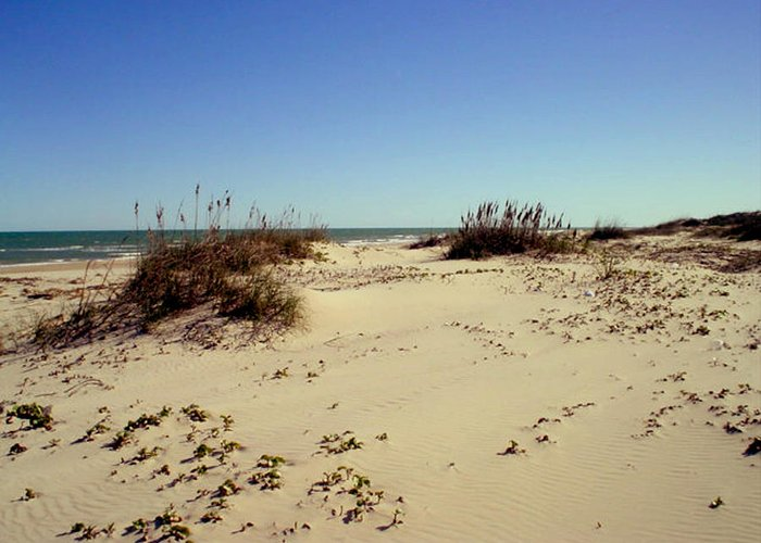Sand Greeting Card featuring the photograph South Padre Island Dunes by Evelyn Patrick