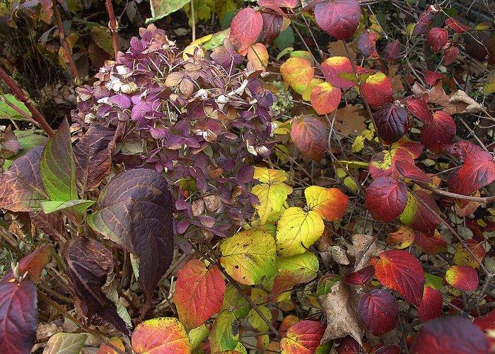Autumn Greeting Card featuring the photograph Sublime Autumn Spectrum by Terrance De Pietro