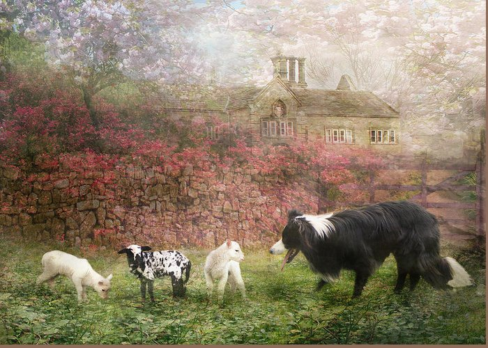 Border Collie Greeting Card featuring the photograph The Babysitter by Trudi Simmonds