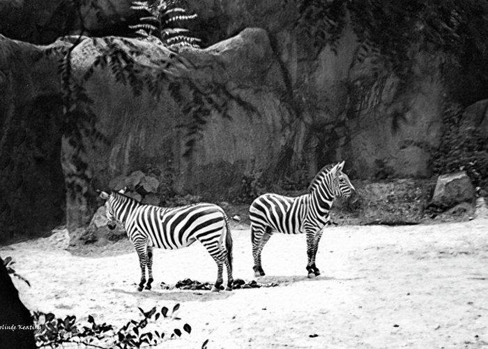 Black_ And_ White Greeting Cards