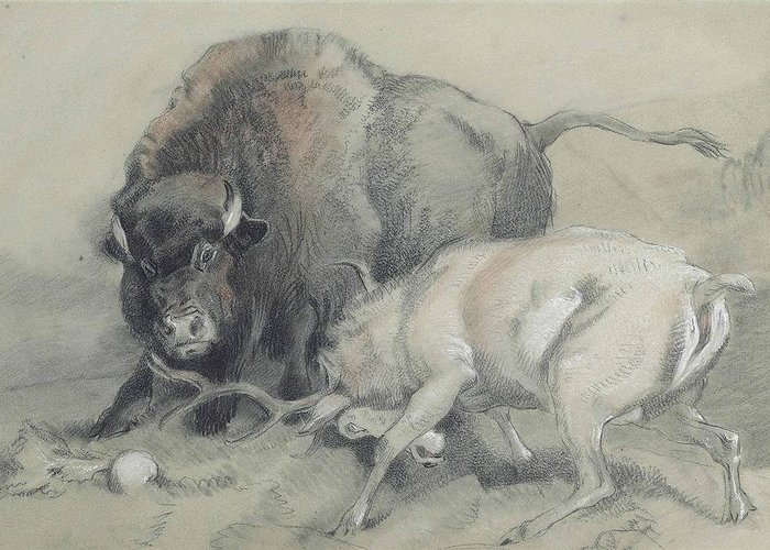 Sir Edwin Henry Landseer Greeting Card featuring the painting A Stag Challenging A Bison by MotionAge Designs
