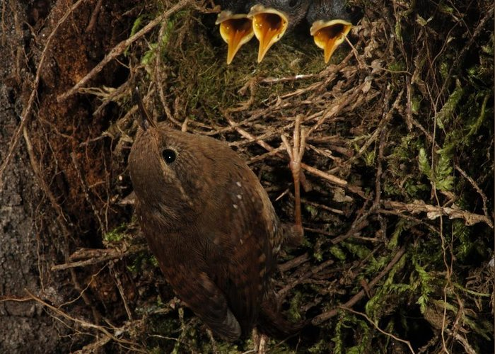 Portrait Greeting Card featuring the photograph A Visit To The Nest by Damon Calderwood