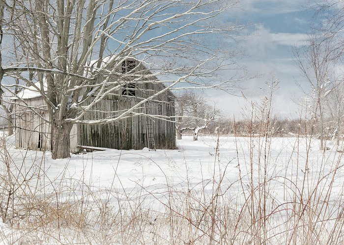 Winter Greeting Card featuring the photograph A Winters Day by Bill Wakeley
