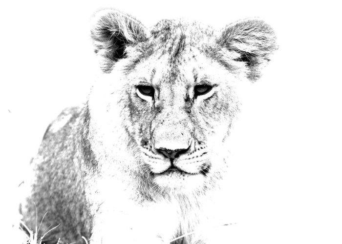 Africa Greeting Card featuring the photograph African Lion by Aidan Moran