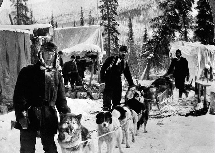 1900 Greeting Card featuring the photograph Alaskan Dog Sled, C1900 by Granger