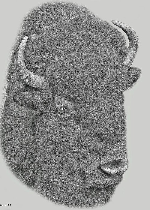 American Bison Greeting Card featuring the digital art American Bison by Larry Linton
