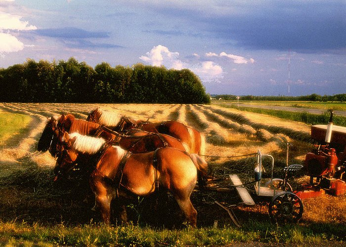 Harvest Greeting Card featuring the photograph Amish Hay Rig by Roger Soule