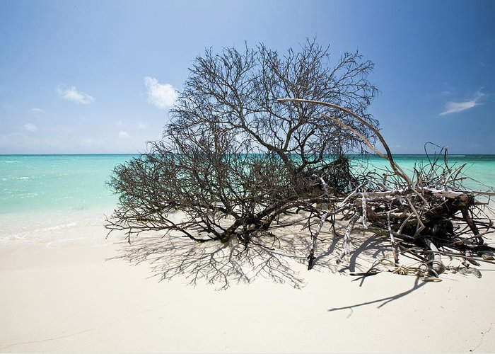 Bvi Greeting Card featuring the photograph Anegada by Diego Pagani