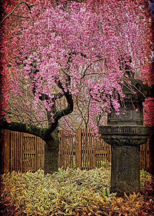 Asian Greeting Card featuring the photograph Asian Spring by Chris Lord