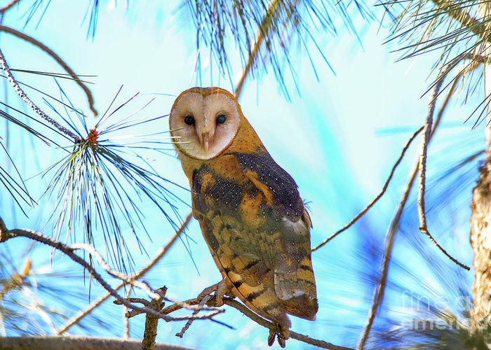 Tyto Alba Greeting Card featuring the photograph Barn Owl Beauty by Craig Corwin
