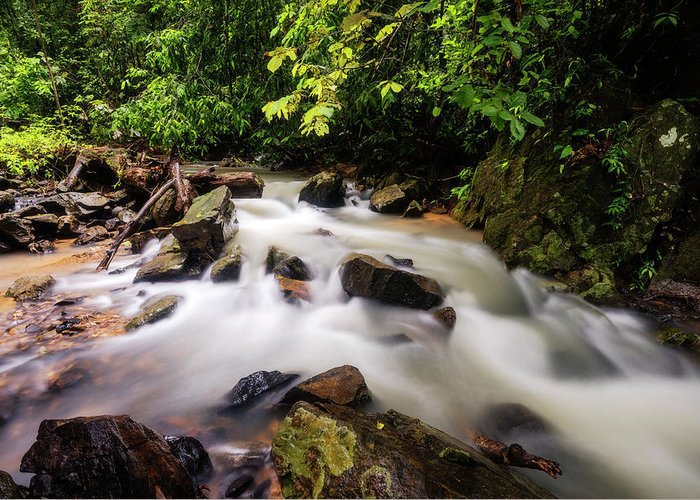 Stream Greeting Card featuring the photograph Beautiful Stream In Western Ghats by Vishwanath Bhat