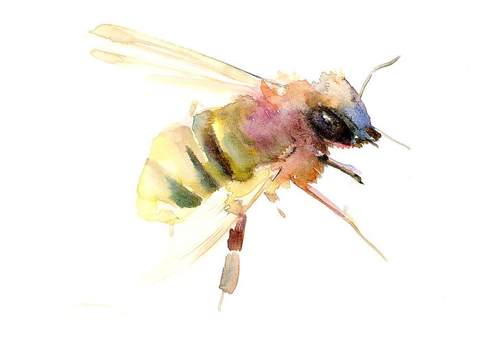 Bees Drawings Greeting Cards