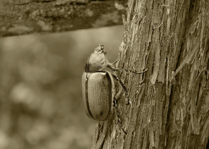 Beetle Greeting Card featuring the photograph Beetle On A Log by Robert Hamm