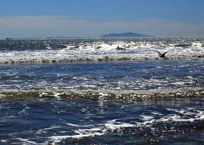 Beach Greeting Card featuring the photograph Bird On A Wave by Robin Hernandez