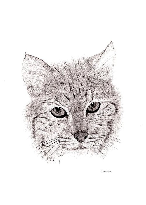 Pen And Ink Bobcats Drawings Greeting Cards