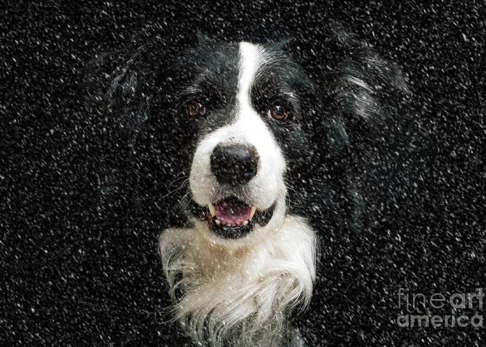Dogs In Snow Photographs Greeting Cards