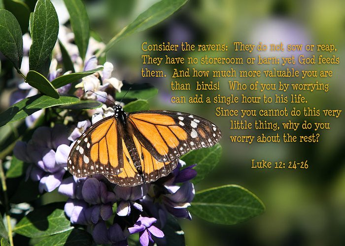 Scripture Greeting Card featuring the photograph Butterfly With Scripture by Linda Phelps