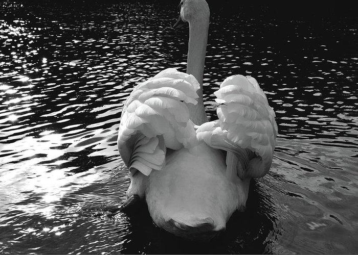 Swan Greeting Card featuring the photograph Calm by Darren Johnson