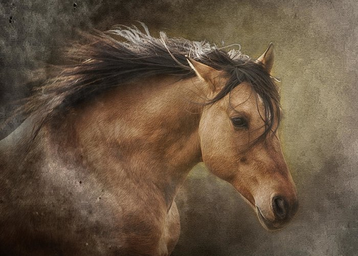 Equine Greeting Card featuring the photograph Chase The Wind by Ron McGinnis