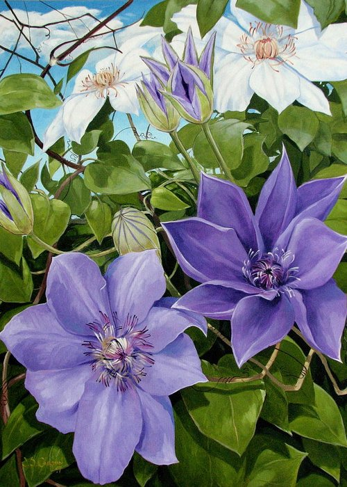 Clematis Greeting Card featuring the painting Clematis 2 by Jerrold Carton