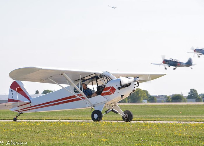Piper Greeting Card featuring the photograph Cub And More by Matt Abrams