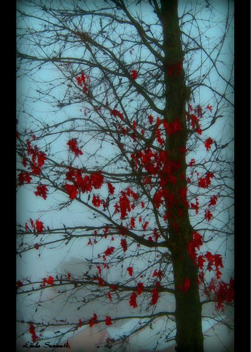 Tree Winter Nature Greeting Card featuring the photograph Cold Day In Winter by Linda Sannuti