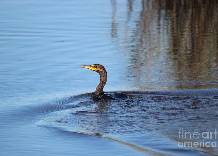 Cormorant Greeting Card featuring the photograph Cormorant In The Marsh by Paulette Thomas