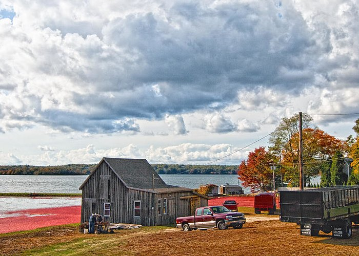 Cape Cod Greeting Card featuring the photograph Cranberry Farming by Gina Cormier