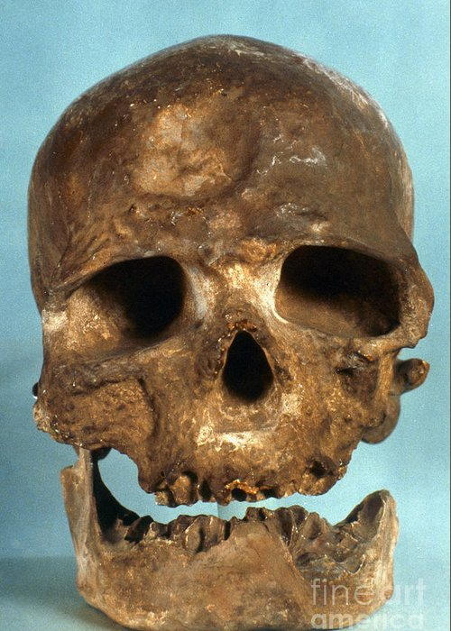 Artifact Greeting Card featuring the photograph Cro-magnon Skull by Granger
