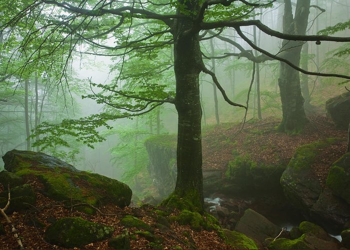 Fog Greeting Card featuring the photograph Dark Forest by Evgeni Dinev
