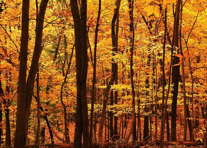 Autumn Greeting Card featuring the photograph Delicious Autumn by Mitch Cat