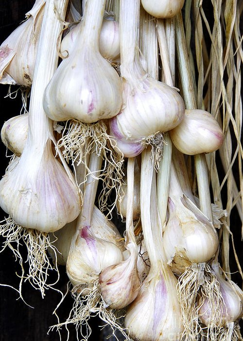 Organic Greeting Card featuring the photograph Drying Garlic by Thomas R Fletcher