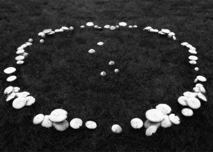 Mushrooms Greeting Card featuring the photograph Fairy Ring by Mark Wagoner