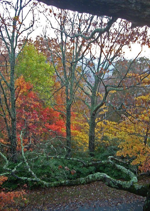 Trees Greeting Card featuring the photograph Fall in the NC Mountains by Beebe Barksdale-Bruner