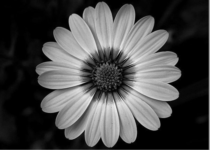 Flower Greeting Card featuring the photograph Fascinating Legacy by Michiale Schneider