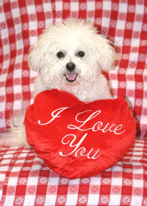 Animal Greeting Card featuring the photograph Fifi Loves You by Michael Ledray