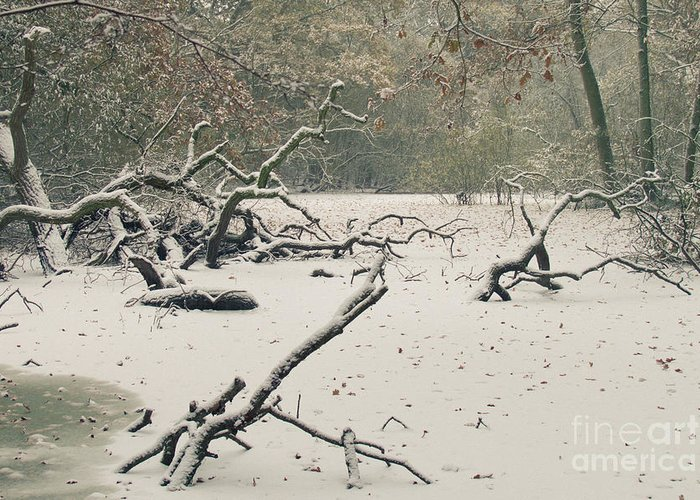 Countryside Greeting Card featuring the photograph Frozen Fallen by Andy Smy