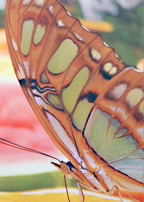 Golden Butterfly Greeting Card featuring the photograph Golden Butterfly by Don Wright