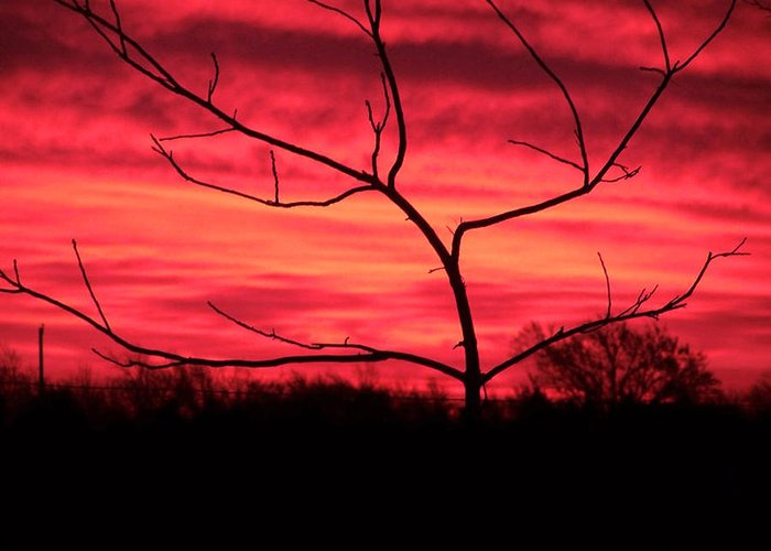 Sunset Greeting Card featuring the photograph Good Evening by Evelyn Patrick