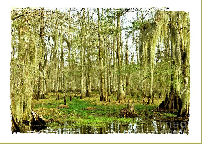 Swamp Greeting Card featuring the photograph Grand Bayou Swamp by Scott Pellegrin
