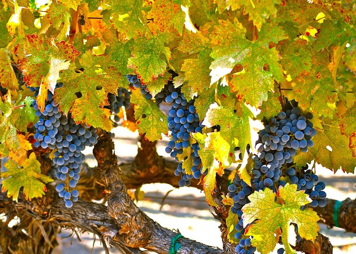 Blue Grapes Greeting Card featuring the photograph Grapes by Dorota Nowak