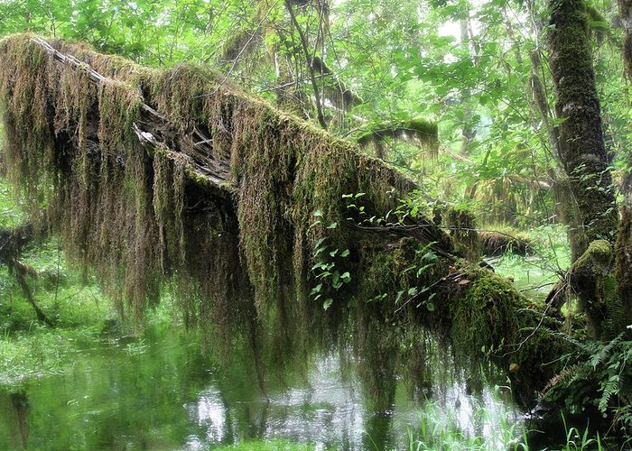 Rainforest Greeting Card featuring the photograph Hall Of Mosses - Hoh Rain Forest Olympic National Park Wa Usa by Christine Till