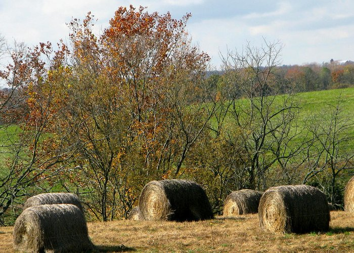Hay Bales Greeting Card featuring the photograph Hay Bales by Martie DAndrea