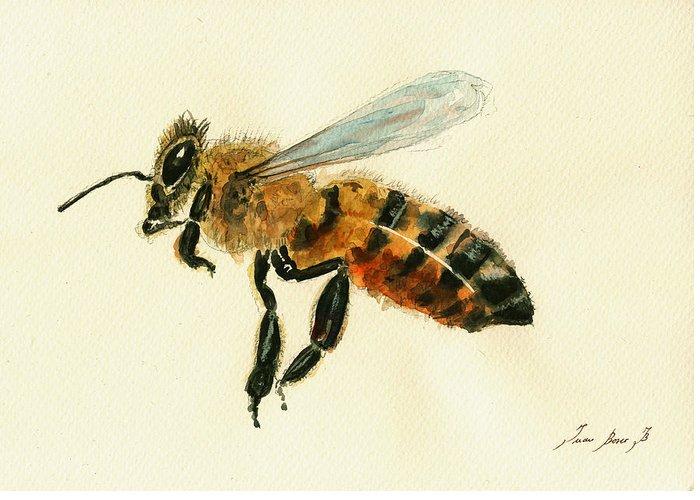 Honey Greeting Cards