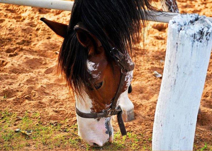 Horse Greeting Card featuring the photograph Horse by Alasarami Alasarami