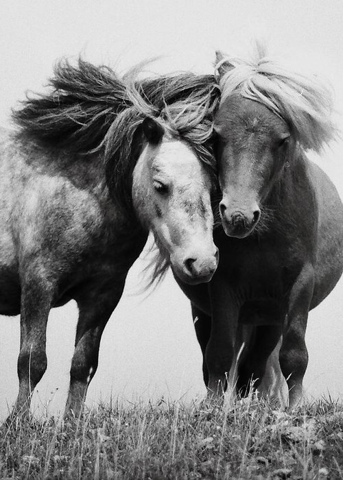 Greeting Card featuring the photograph Horses 2 by Stephen Harris
