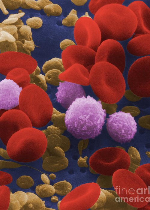 Blood Cell Greeting Card featuring the photograph Human Blood Cells by NIH / Science Source